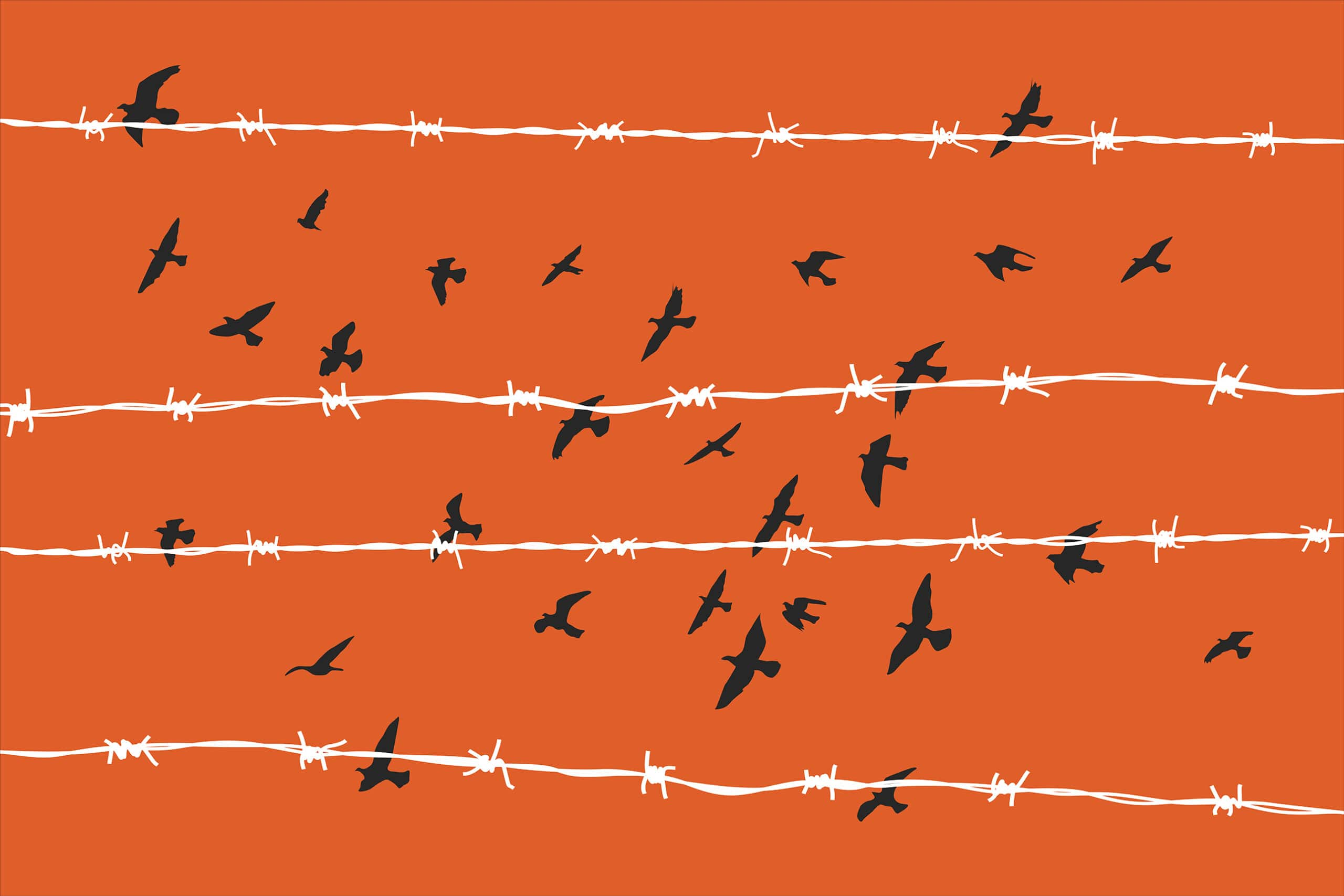 Graphic of birds fly behind barbed wire